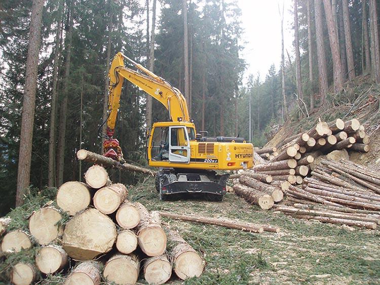 österreichische Holzindustrie – Liegt Stark Im Aufwärtstrend